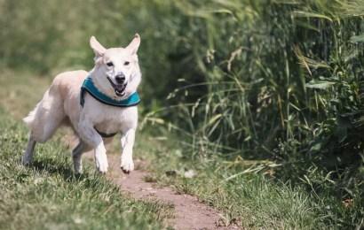 La importancia de la desparasitación para mantener sana a tu mascota