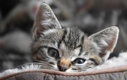 Club del Gato: el portal online para cuidar de tu mascota