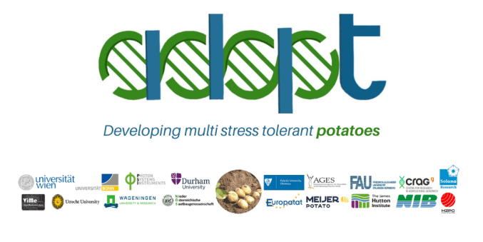 Europatat participates in the ADAPT project to make potatoes fit for the  challenging growth conditions of the future | Europatat