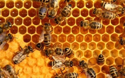Collective thinking is honey