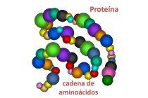 Las proteínas a análisis