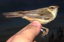 NG Anillamiento Aves