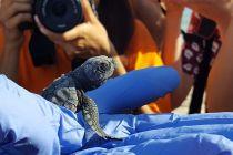 programa-25-campamento-tortuga