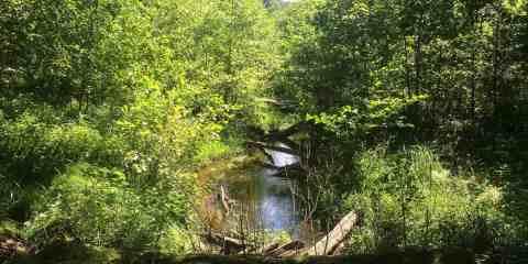 Königsbrücker Heide Wilderness