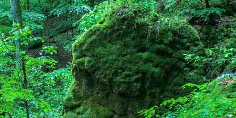 Uholka-Shyrokyy Luh WILDForest