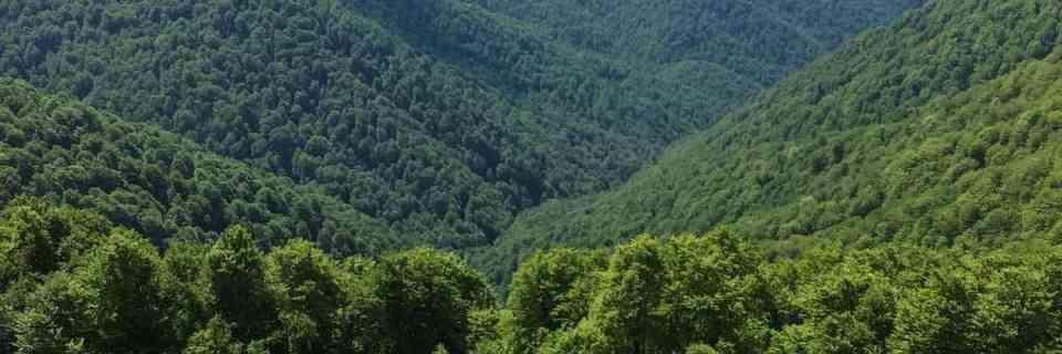 Uholka-Shyrokyy Luh Wilderness