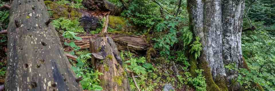 Hoverla Wilderness