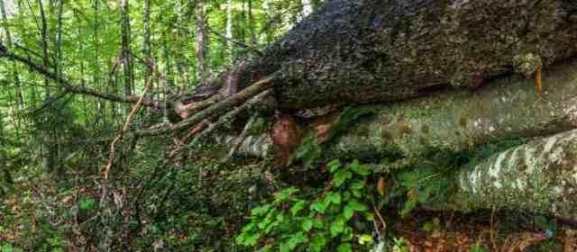 New Wilderness in Carpathian Biosphere Reserve
