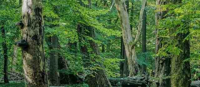 German Wilderness gets €10 Mio annual investment
