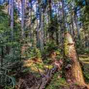 Exploring the jungle of Mantaritsa WILDForest