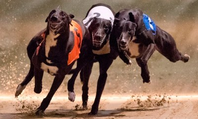 SIS signs exclusive partnership with Irish Greyhound Derby