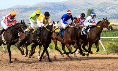 Rolling In It: Most Profitable Racehorse