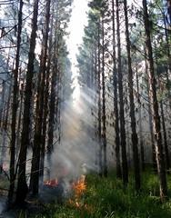 L'UE vient en aide à l'Amérique du Sud pour combattre les feux de forêt