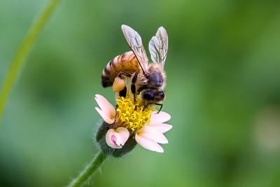Les abeilles du Toulois au service de la qualité de l'air grâce à LEADER