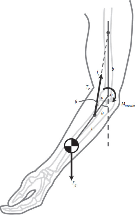 The Use of Dynamic Assist Orthosis for Muscle Reeducation