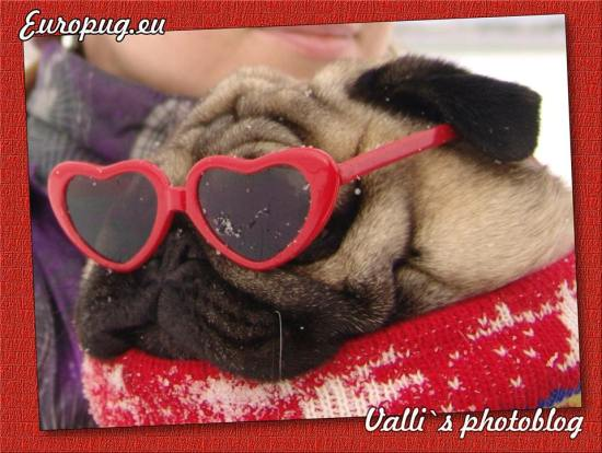 Funny pugmops in glasses  Gifts For Pug Lovers