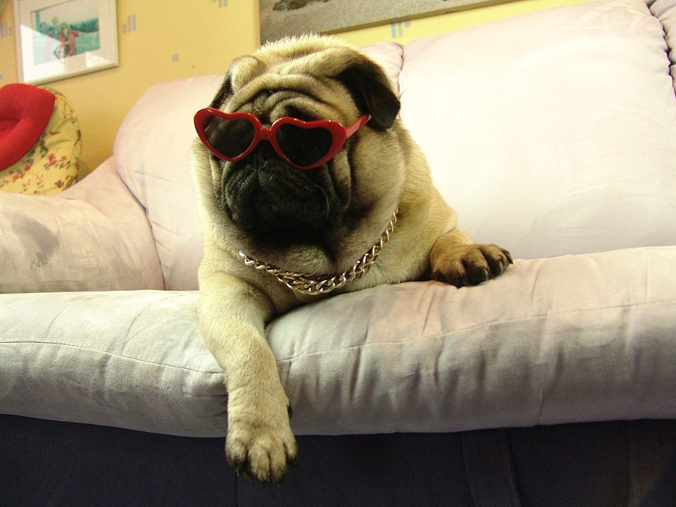Dog with gold chain necklace  Gifts For Pug Lovers
