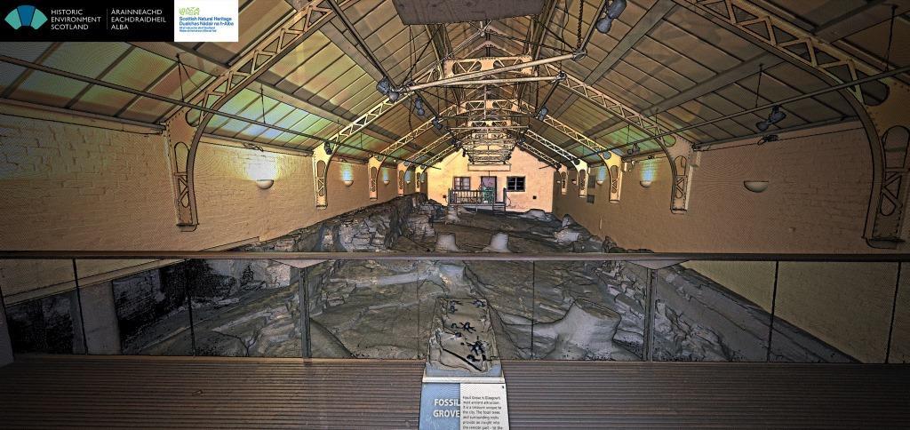 Arboleda Fosil de Glasgow - fuente: scotlandsnature.blog