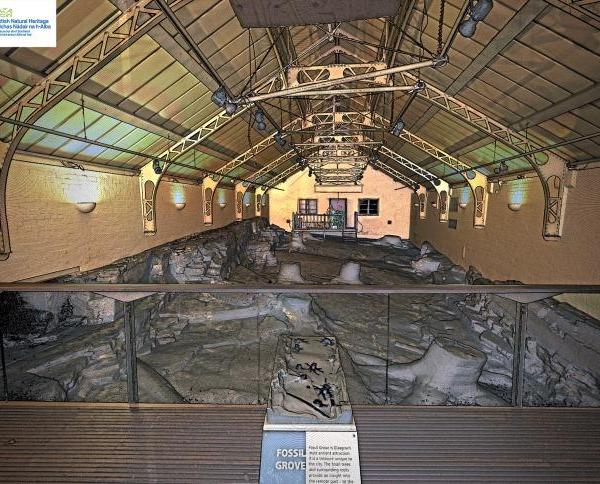 Arboleda Fósil de Glasgow