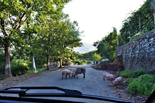Unexpected road attractions in Albania