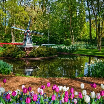 You won't see this in Amsterdam - Keukenhof gardens