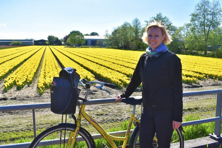 Bike trip among the tulip fields in Noordwijkerhout in the Netherlands