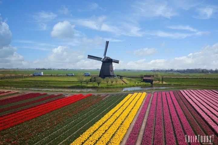 See the most iconic Dutch view! Photo by Tulip Tours Holland