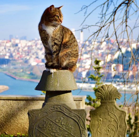 Cats of Istanbul lead a pleasant life