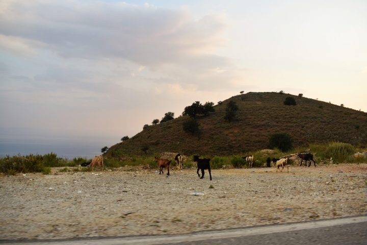 Goat Sunset