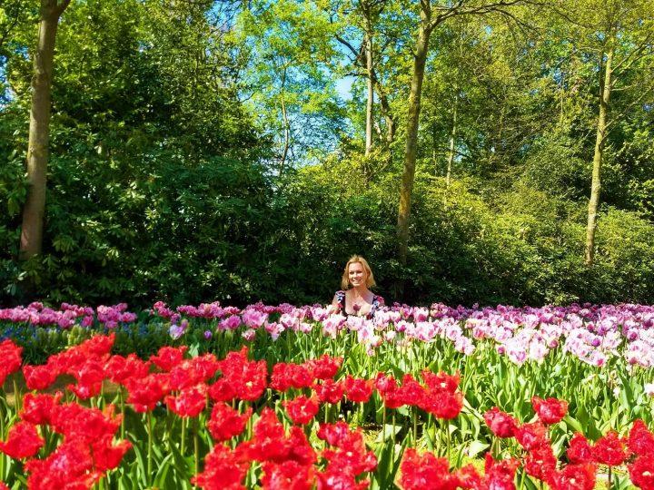 Inmersión Total en Tulipmania