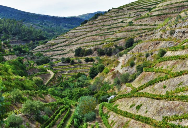 Characteristic and quite unique terraced landscapes of the Douro Valley vineyards are a memorable sight