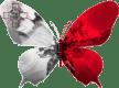 Malte-papillon