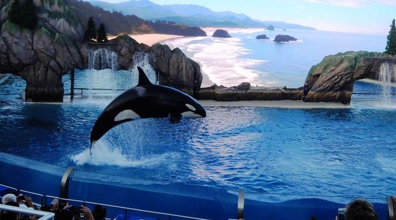 L'orque, victime de la cruauté de l'homme