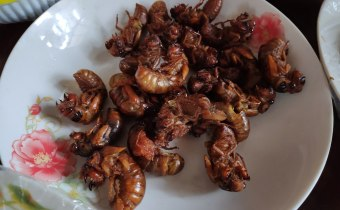Can eating insects save the world?