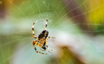 Wound-healing sticky tape for surgeries inspired by spiders