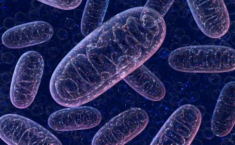 Making The Brain: The Role of Mitochondria