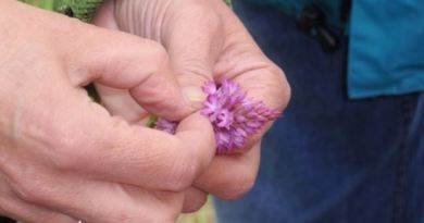 """Valderejo acoge un """"maratón"""" de biodiversidad para inventariar su fauna y flora,"""