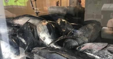 La Policía Local de Vitoria requisa 120 kilos de bonito en un remolque para perros,