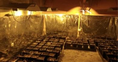 Desmantelan una plantación de marihuana en una vivienda unifamiliar de Mungia,