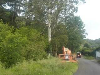URA retira 12 eucaliptos de gran porte del arroyo Kurtzio en Bermeo,