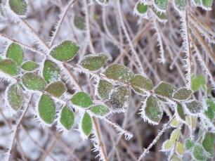 Frost_Botanischer Garten
