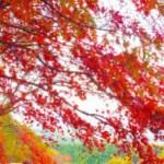 そろそろ秋色カラーにヘアチェンジ?
