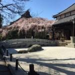 浦和 玉蔵院の桜