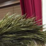 髪が毬藻になりました。でも安心してください…