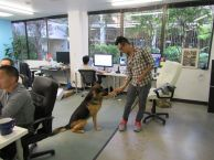 -very-dog-friendly-office