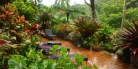 20 Gardens Tropical Plants Design Ideas | EVA Furniture
