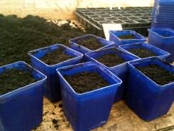 sprinkled some leek seeds evenly in the soil