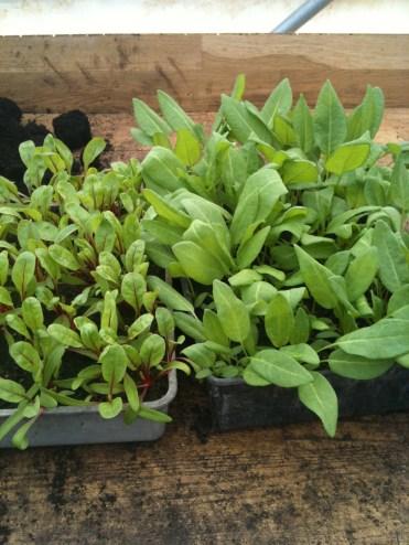 plant trays