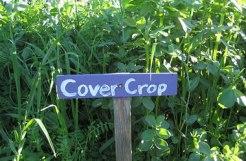 help to fertilize the soil -green manure