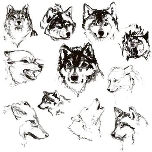 wolfsketches